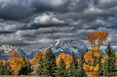 Grand Teton Mountains with Autumn (Fall) colour\nGrand Tetons National Park\nWyoming. USA\nLA006629