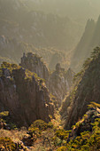 Kiefern und Berge, Yellow Montains, Huangshan, Provinz Anhui, China LA008469
