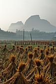 Dörfliche Reisfelder mit Reisstrohballen zum Trocknen, Guilin, Region Guangxi, China LA008010