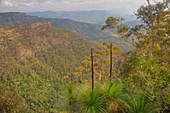Grass Trees growing on edge of Python Rock\nLamington National Park\nQueensland, Australia\nLA009372