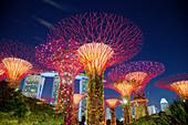 Supertrees Lit at Night\nMarina Bay Gardens\nSingapore\nTV000490