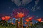 Supertrees Lit after Dark\nMarina Bay Gardens\nSingapore\nTV000562