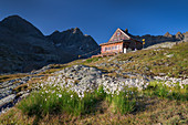 Flowers and mountains at the Nossberger Hütte in the Gradental in the Hohe Tauern National Park, Austria