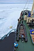 Polar Bear\n(Ursus arctos)\nnext to tourist ship\nSvalbard