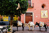 Guanajuato, Mexico - March 1, 2016: Three donkeys are standing on the street and carrying goods.