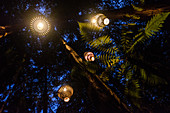Rotorua, New Zealand - November 11, 2017: Outdoor Lighting by David Trubridge in the Redwoods Treewalk. Visitors can explore Rotorua's Redwood forest under David Trubridge lighting installation at night, which has a total of 30 lantern.