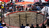 Cusco, Peru - January 7, 2012: People are watching a cockfight.