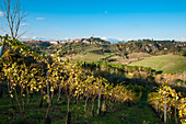 Countryside around San Miniato