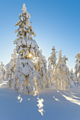Snow-covered trees in Pyhä-Luosto National Park, Finland
