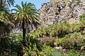 Palmenhain am Fluss hinter dem Palmenstrand von Preveli im Sommer, Mitte Kreta, Griechenland