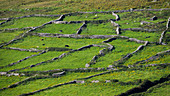 Stone walls, dry stone walls as pasture boundary, Dingle Peninsula, County Kerry, Ireland