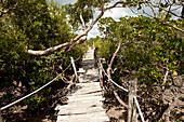 Suspension bridges through the mangroves of Mida Creek, Skywalk, Mida Creek, Watamu, Malindi, Kenya