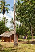 Clay hut in coconut plantation, Watamu, Malindi, Kenya