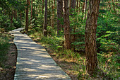 Wooden plank path leads through forest, Sterntaler Filz, Bavarian Alps, Upper Bavaria, Bavaria, Germany