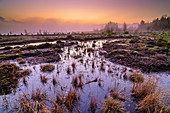 Foggy mood over renatured raised bog, Sterntaler Filz, Bavarian Alps, Upper Bavaria, Bavaria, Germany