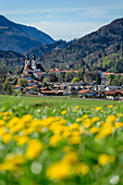 Church of Aschau with dandelion meadow in the foreground, Aschau, Chiemgau, Upper Bavaria, Bavaria, Germany