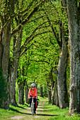 Woman rides a bicycle through Lindenallee, Tittmoning, Benediktradweg, Upper Bavaria, Bavaria, Germany