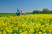 Woman and man cycling, blooming rapeseed field in the foreground, Brannenburg, Upper Bavaria, Bavaria, Germany