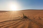 The desert to Dubai, UAE