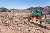 Donkey grazes near the high sacrificial place in Petra, Jordan