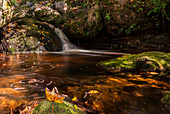 A small waterfall in the forest. Autumn foliage. Ysperklamm, Lower Austria.