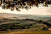 Hilly landscape in the evening light, Buonconvento, Tuscany, Italy
