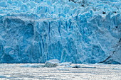 Detail of the front wall of the glacier with chunks of ice in the water, Garibaldi Glacier, near Beagle Channel, Alberto de Agostini National Park, Magallanes y de la Antartica Chilena, Patagonia, Chile, South America