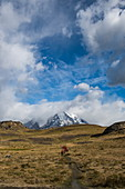 Dramatic landscape of rolling hills, snow-capped mountains and partly cloudy skies, Torres del Paine National Park, Magallanes y de la Antartica Chilena, Patagonia, Chile, South America