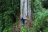 A person stands with arms outstretched at the base of a massive tree trunk (probably Fitzroya cupressoides), surrounded by vegetation, near Chalten, Chile, Patagonia, Chile, South America