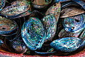 A basket full of paua (abalone) shells glows with intense colors, Kaikoura, South Island, New Zealand