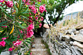 Flowers in Kastro, the old capital of Skiathos island, Greece