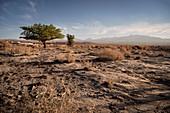View to Licancabur volcano in the Cordillera Occidental, San Pedro de Atacama, Atacama Desert, Antofagasta Region, Chile, South America