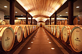 Wine storage in oak barrels, Lapostolle Winery, Santa Cruz, Colchagua Valley (wine growing area), Chile, South America
