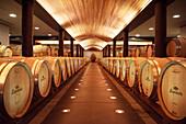 Wein Lagerung in Eichen Fässern, Weingut Lapostolle, Santa Cruz, Colchagua Tal (Weinanbau Gebiet), Chile, Südamerika