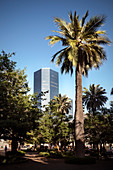 View from the park of the Plaza de Armas to the surrounding office tower, capital city Santiago de Chile, Chile, South America