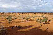 Landschaft bei Kalkrand, Kalahari Becken, Namibia