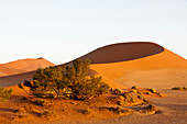 Big Mama dune in the Sossusvlei area, Namib Naukluft Park, Namibia