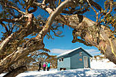 Derrick's Hut in the Alpine National Park during a ski tour, Victoria, Australia