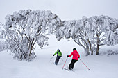 Skiing through snow eucalyptus off-piste in the Mt. Hotham ski area, Victoria, Australia
