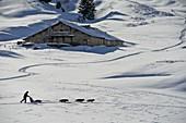 France, Haute-Savoie, la Clusaz, dog sled ride on the Aravis pass