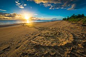 France, Guiana, Cayenne, Rémire-Montjoly beach, return track to the Atlantic Ocean of a female leatherback turtle (Dermochelys coriacea) after nesting in the early morning