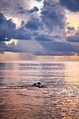 Französisch-Guayana, Cayenne, Strand von Rémire-Montjoly, weibliche Lederschildkröte (Dermochelys coriacea) kehrt nach dem Nisten am frühen Morgen zum Atlantik zurück