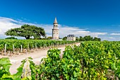 France, Gironde, Begadan, Chateau La Tour de By, vineyard of 94 ha (AOC Medoc), member of Union des Grands Crus de Bordeaux, the tower, former lighthouse built in 1825 and the cedar planted in 1865