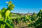 Frankreich, Gironde, Saint-Emilion, UNESCO-Weltkulturerbe, Weinberg Bordeaux, AOC Saint-Emilion, mittelalterliche Stadt und monolithische Kirche