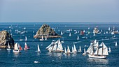 France, Finistere, Brest, Brest 2016 International Maritime Festival, large gathering of traditional boats from around the world, every four years for a week, race between Brest and Douarnenez, view from the Pointe de Pen Hir