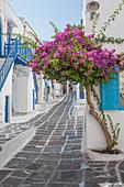 Purple flowers by building in Mykonos, Greece