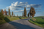 Cypress trees by road in Tuscany, Italy