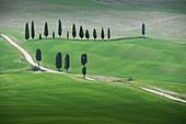 Bäume entlang der Straße in der Toskana, Italien