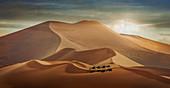 Mann mit Kamelen in der Wüste in Abu Dhabi, Vereinigte Arabische Emirate