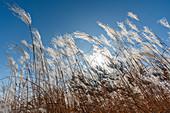 Grass against clear sky